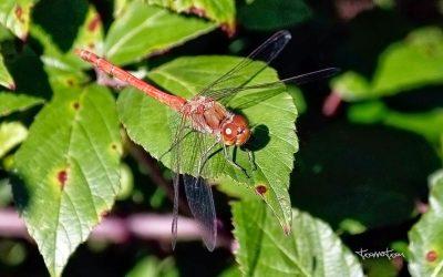 Insectos de otoño