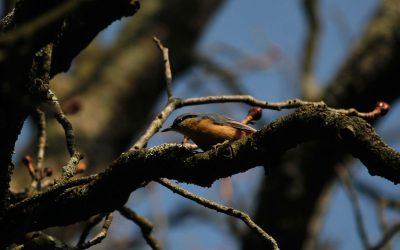 Bienvenidos a este blog dedicado a las Aves